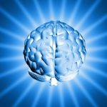 conflict and the brain