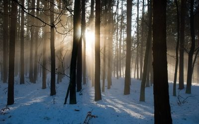 How to cope with the winter blues – part 1